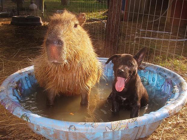 Chỉ mong đời thật an nhiên và yên bình như chuột lang béo ú: Thân thiện như hoa hậu hoàn vũ, giao lưu từ đầu gấu cho tới hiền lành trong giới động vật - Ảnh 6.