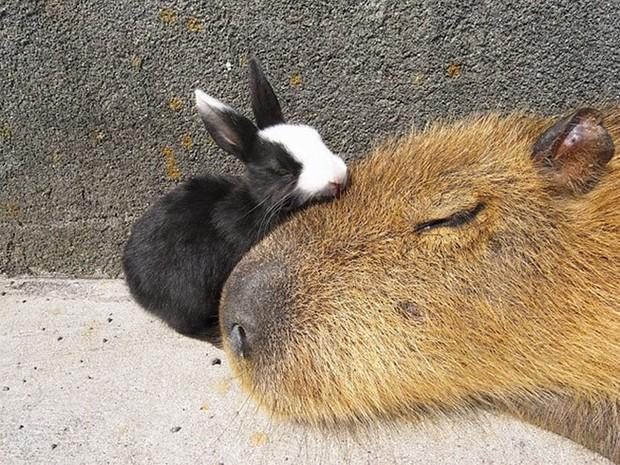 Chỉ mong đời thật an nhiên và yên bình như chuột lang béo ú: Thân thiện như hoa hậu hoàn vũ, giao lưu từ đầu gấu cho tới hiền lành trong giới động vật - Ảnh 8.