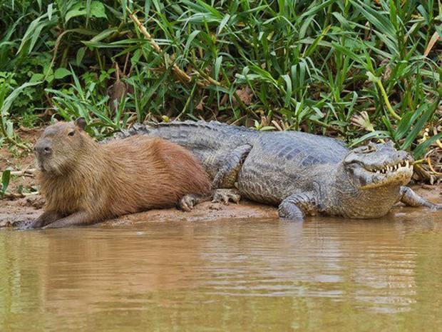 Chỉ mong đời thật an nhiên và yên bình như chuột lang béo ú: Thân thiện như hoa hậu hoàn vũ, giao lưu từ đầu gấu cho tới hiền lành trong giới động vật - Ảnh 11.