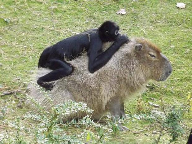 Chỉ mong đời thật an nhiên và yên bình như chuột lang béo ú: Thân thiện như hoa hậu hoàn vũ, giao lưu từ đầu gấu cho tới hiền lành trong giới động vật - Ảnh 12.