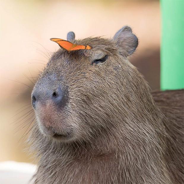 Chỉ mong đời thật an nhiên và yên bình như chuột lang béo ú: Thân thiện như hoa hậu hoàn vũ, giao lưu từ đầu gấu cho tới hiền lành trong giới động vật - Ảnh 13.