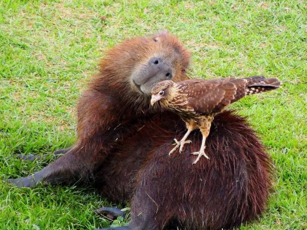 Chỉ mong đời thật an nhiên và yên bình như chuột lang béo ú: Thân thiện như hoa hậu hoàn vũ, giao lưu từ đầu gấu cho tới hiền lành trong giới động vật - Ảnh 15.