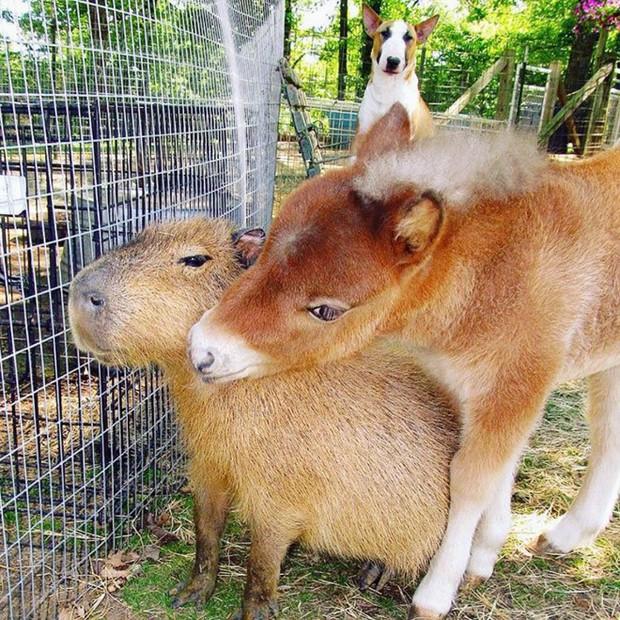 Chỉ mong đời thật an nhiên và yên bình như chuột lang béo ú: Thân thiện như hoa hậu hoàn vũ, giao lưu từ đầu gấu cho tới hiền lành trong giới động vật - Ảnh 17.