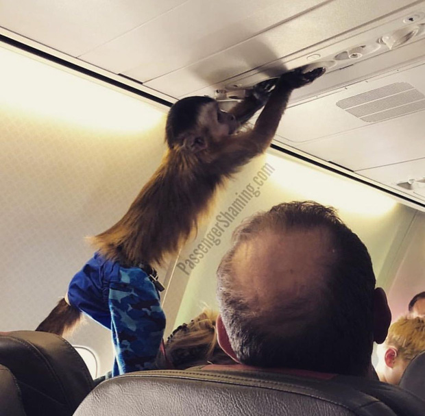 """Đi máy bay mà cứ hồn nhiên như ở nhà mình, loạt hành khách này đích thị là những kẻ """"tạo nghiệp"""" tài ba! - Ảnh 31."""