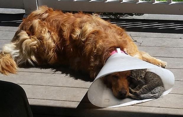 Những bức ảnh chứng minh chó mèo không ghét nhau như chúng ta tưởng - Ảnh 2.
