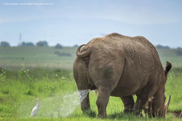 Những bức ảnh siêu hài hước trong chung kết cuộc thi nhiếp ảnh động vật hoang dã Comedy - Ảnh 2.