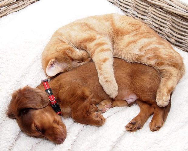 Những bức ảnh chứng minh chó mèo không ghét nhau như chúng ta tưởng - Ảnh 14.