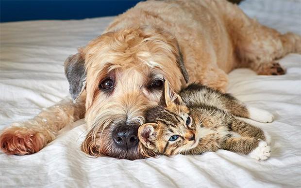 Những bức ảnh chứng minh chó mèo không ghét nhau như chúng ta tưởng - Ảnh 16.