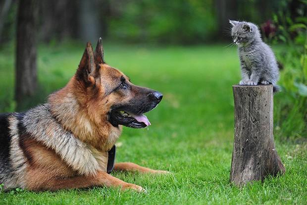 Những bức ảnh chứng minh chó mèo không ghét nhau như chúng ta tưởng - Ảnh 17.