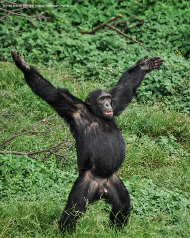 Những bức ảnh siêu hài hước trong chung kết cuộc thi nhiếp ảnh động vật hoang dã Comedy - Ảnh 21.