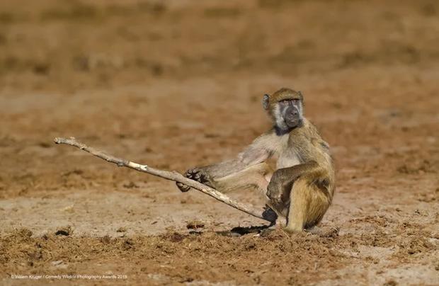 Những bức ảnh siêu hài hước trong chung kết cuộc thi nhiếp ảnh động vật hoang dã Comedy - Ảnh 23.