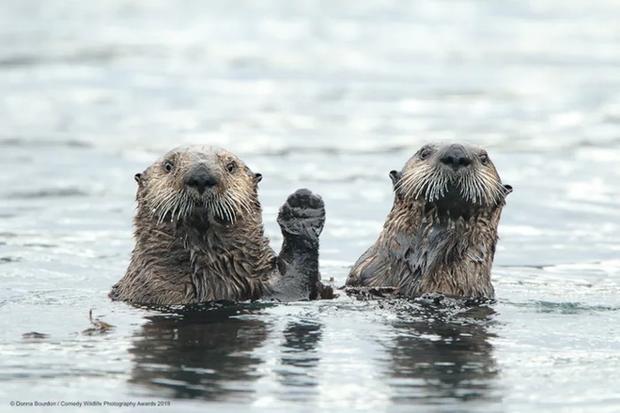 Những bức ảnh siêu hài hước trong chung kết cuộc thi nhiếp ảnh động vật hoang dã Comedy - Ảnh 8.