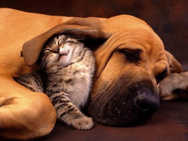 Những bức ảnh chứng minh chó mèo không ghét nhau như chúng ta tưởng - Ảnh 9.