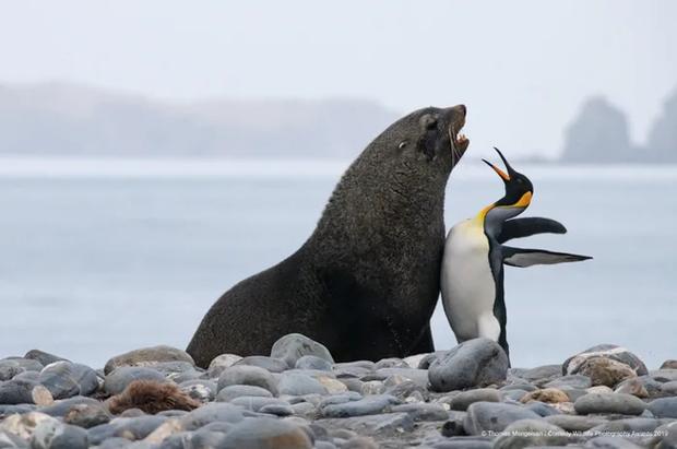 Những bức ảnh siêu hài hước trong chung kết cuộc thi nhiếp ảnh động vật hoang dã Comedy - Ảnh 10.
