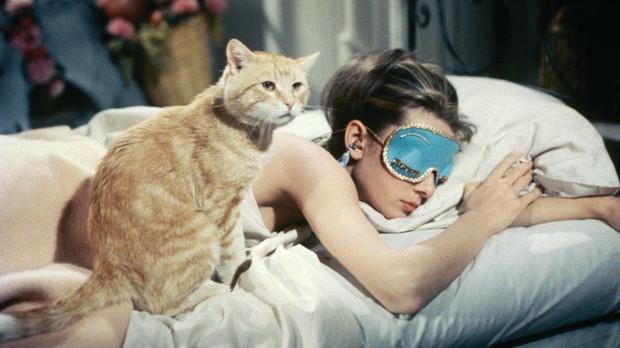 Ngạc nhiên chưa: Lười ra khỏi giường buổi sáng chính là dấu hiệu của một người thông minh vượt trội - Ảnh 3.