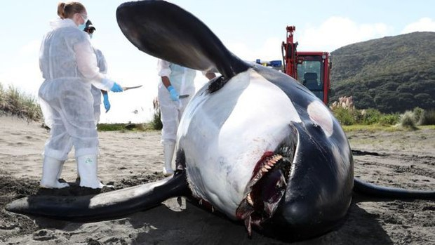 Bi kịch của cá heo châu Âu: Môi trường sống là một mớ hổ lốn toàn chất ô nhiễm, nồng độ thủy ngân cao kỷ lục - Ảnh 2.