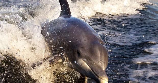 Bi kịch của cá heo châu Âu: Môi trường sống là một mớ hổ lốn toàn chất ô nhiễm, nồng độ thủy ngân cao kỷ lục - Ảnh 1.