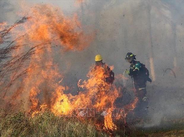 Cháy rừng vẫn tiếp tục lan rộng tại Bolivia - Ảnh 1.