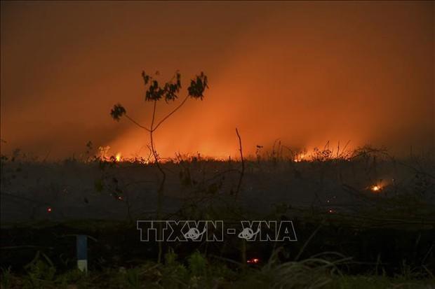 Indonesia: Bùng phát cháy rừng tại các đồn điền thuộc sở hữu của công ty Malaysia - Ảnh 1.