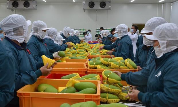 6 loại trái cây tươi ở Việt Nam đã được xuất khẩu thành công với giá bán khó tin - Ảnh 11.