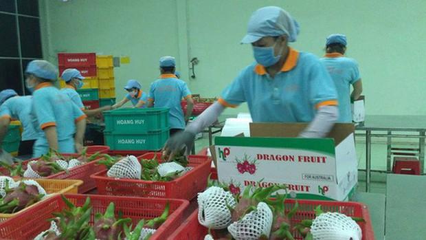 6 loại trái cây tươi ở Việt Nam đã được xuất khẩu thành công với giá bán khó tin - Ảnh 5.
