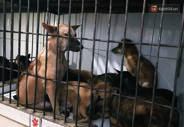 TP. HCM khuyên người dân không nên ăn thịt chó vì dễ bị nhiễm bệnh dại - Ảnh 1.
