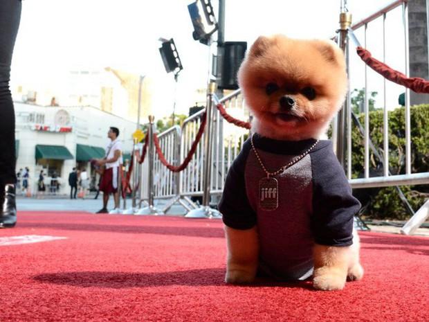 23 chú thú cưng có sức ảnh hưởng nhất thế giới, có chú đạt cả kỷ lục Guinness vì đi bằng... hai chân - Ảnh 23.