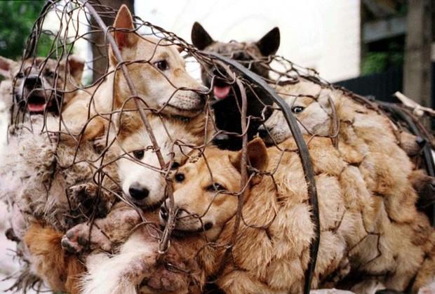Giải cứu hơn 40 con chó trong đêm, bắt 10 cẩu tặc - Ảnh 1.