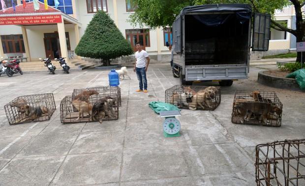 Ba thanh niên đánh xe tải từ Đăk Lăk qua Gia Lai trộm chó - Ảnh 2.