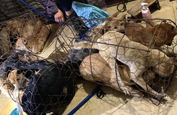Triệu tập 30 nghi phạm trong đường dây trộm chó, tiêu thụ hơn 100 tấn - Ảnh 1.