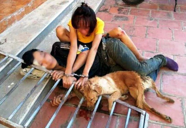 Triệu tập 30 nghi phạm trong đường dây trộm chó, tiêu thụ hơn 100 tấn - Ảnh 2.