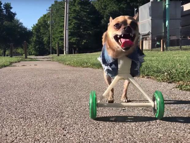 23 chú thú cưng có sức ảnh hưởng nhất thế giới, có chú đạt cả kỷ lục Guinness vì đi bằng... hai chân - Ảnh 3.