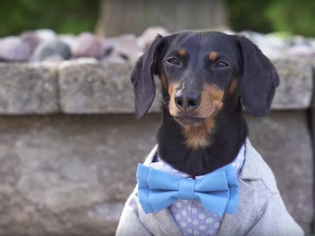 23 chú thú cưng có sức ảnh hưởng nhất thế giới, có chú đạt cả kỷ lục Guinness vì đi bằng... hai chân - Ảnh 16.