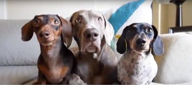 23 chú thú cưng có sức ảnh hưởng nhất thế giới, có chú đạt cả kỷ lục Guinness vì đi bằng... hai chân - Ảnh 5.