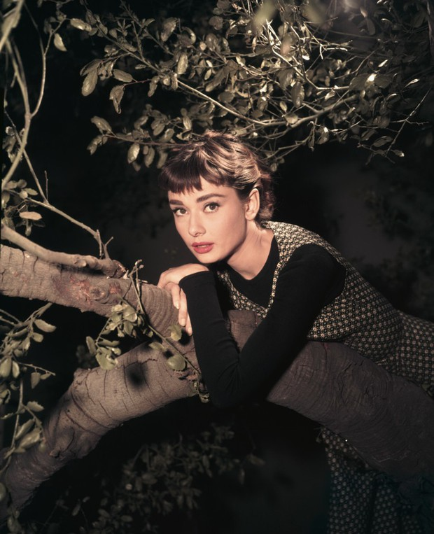 Hot trở lại 10 mỹ nhân Hollywood đẹp nhất thập niên 50: Toàn huyền thoại mọi thời đại, nữ thần thời nay sao đọ lại? - Ảnh 1.