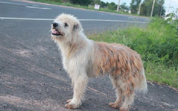 Chú chó đi lạc kiên trì đứng đợi chủ suốt 4 năm trời và hành động gây bất ngờ khi gặp lại người chủ cũ - Ảnh 1.