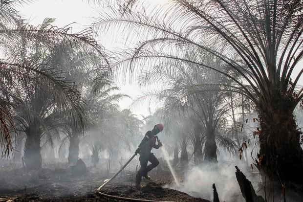 Cháy rừng khiến các nước Đông Nam Á chìm trong khói mù - Ảnh 1.