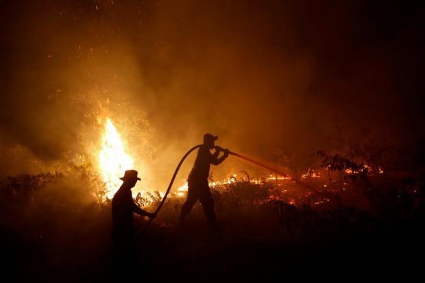 Indonesia bắt giữ gần 200 người liên quan cháy rừng - Ảnh 1.