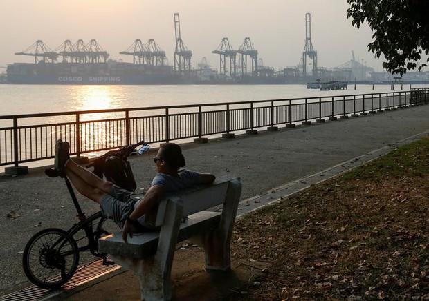 Cháy rừng khiến các nước Đông Nam Á chìm trong khói mù - Ảnh 5.