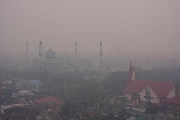 Cháy rừng khiến các nước Đông Nam Á chìm trong khói mù - Ảnh 8.
