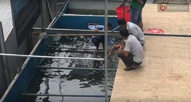 Cá Koi chết sau 2 ngày được thả xuống sông Tô Lịch, bảo vệ túc trực ngày đêm - Ảnh 3.