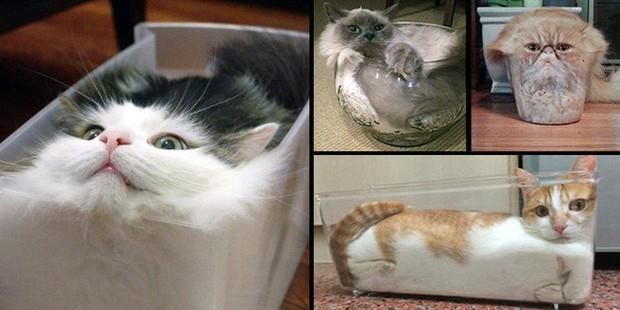 YouTuber bày trò lách khe cửa hẹp cho 2 boss, kiểm chứng xem mèo có làm từ... chất lỏng hay không - Ảnh 1.