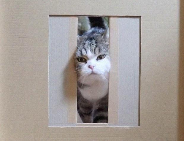 YouTuber bày trò lách khe cửa hẹp cho 2 boss, kiểm chứng xem mèo có làm từ... chất lỏng hay không - Ảnh 11.