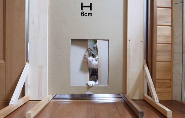 YouTuber bày trò lách khe cửa hẹp cho 2 boss, kiểm chứng xem mèo có làm từ... chất lỏng hay không - Ảnh 12.