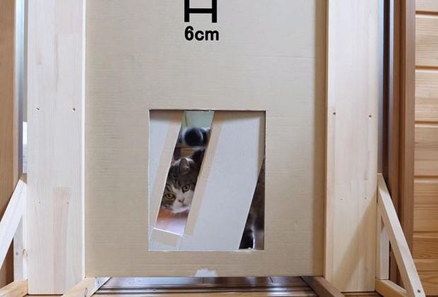 YouTuber bày trò lách khe cửa hẹp cho 2 boss, kiểm chứng xem mèo có làm từ... chất lỏng hay không - Ảnh 13.
