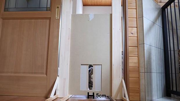 YouTuber bày trò lách khe cửa hẹp cho 2 boss, kiểm chứng xem mèo có làm từ... chất lỏng hay không - Ảnh 14.