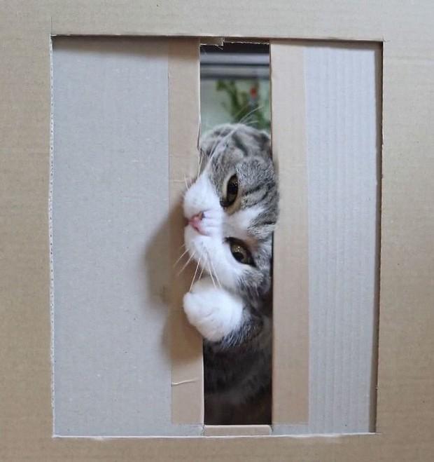 YouTuber bày trò lách khe cửa hẹp cho 2 boss, kiểm chứng xem mèo có làm từ... chất lỏng hay không - Ảnh 15.