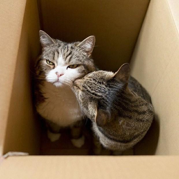 YouTuber bày trò lách khe cửa hẹp cho 2 boss, kiểm chứng xem mèo có làm từ... chất lỏng hay không - Ảnh 3.