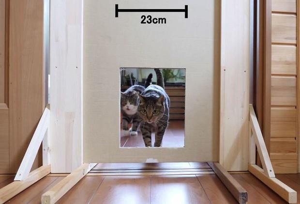 YouTuber bày trò lách khe cửa hẹp cho 2 boss, kiểm chứng xem mèo có làm từ... chất lỏng hay không - Ảnh 4.