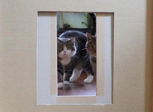 YouTuber bày trò lách khe cửa hẹp cho 2 boss, kiểm chứng xem mèo có làm từ... chất lỏng hay không - Ảnh 6.